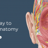 KenHub Human Anatomy 2021-Videos And Photos